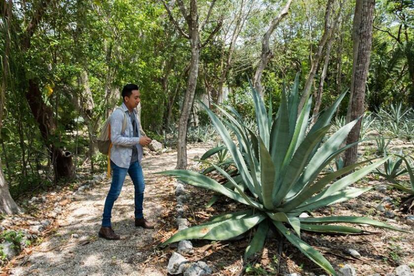 Vista del jardín botánico Roger Orellana en la ciudad de Mérida Yucatán (México). EFE