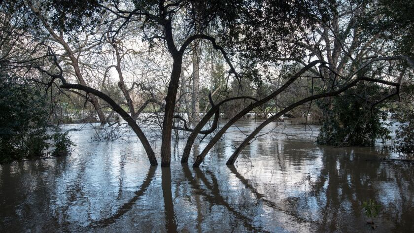 Floodwaters surround trees in Coyote Creek near William Street in San Jose.