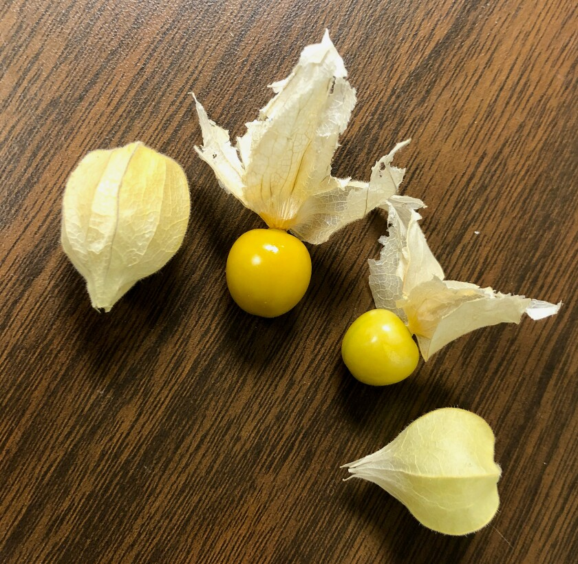 Goldenberries, left, are slightly larger and a little tarter, like cranberries, than their sweeter, smaller cousin, the groundcherry, at right.