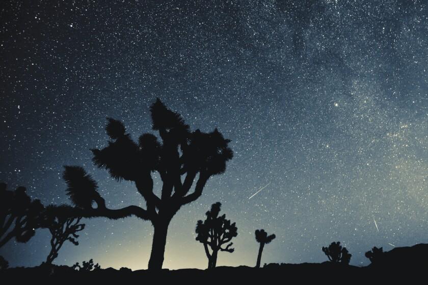 Joshua Tree Stargazing In The Desert Sky South Florida