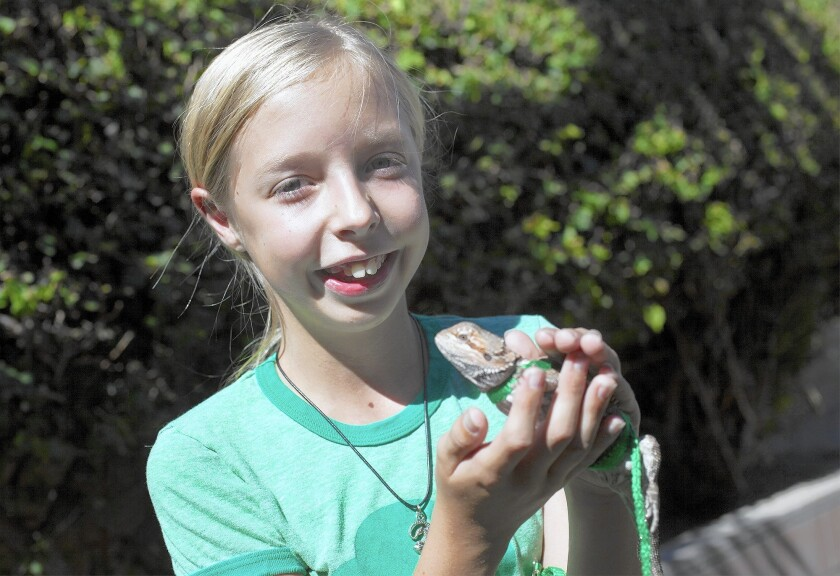 Girl Scout Moira Clark, 12, with Rayquaza, a bearded dragon lizard. Clark's parents purchased Rayquaza, named after a Pokeman character, for her birthday this past May.