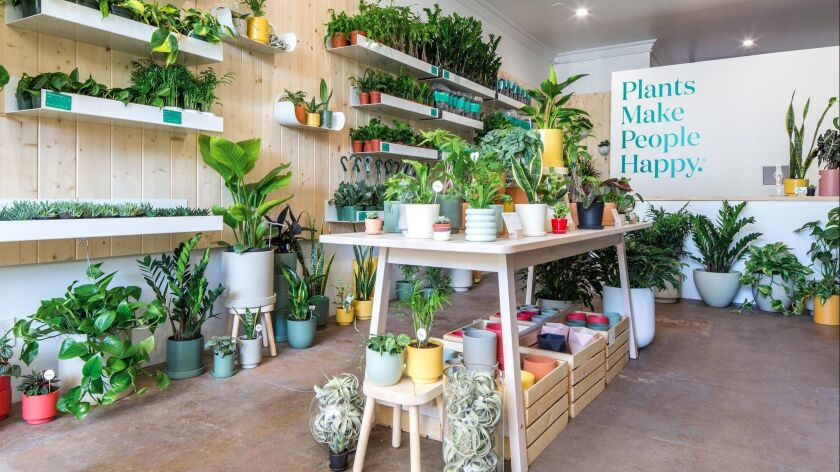 13 Plant Stores That Offer More Than Just Houseplants Los Angeles Times