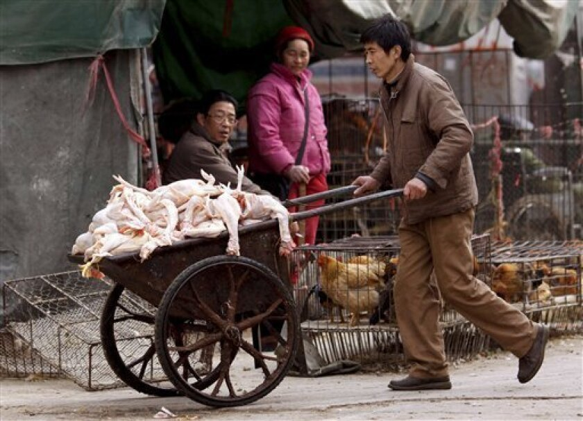 In this Jan. 19, 2009 file photo, a vender carries skinned chickens at a poultry market in Shanghai, China. A 21-year-old woman has been sickened with the H5N1 strain of bird flu, the Health Ministry said, the country's eighth reported case this year. (AP Photo, File)