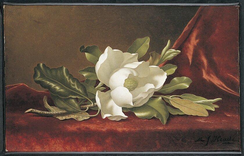 "Martin Johnson Heade: ""The Magnolia Blossom"" (1888) Photo: Timken Museum of Art"