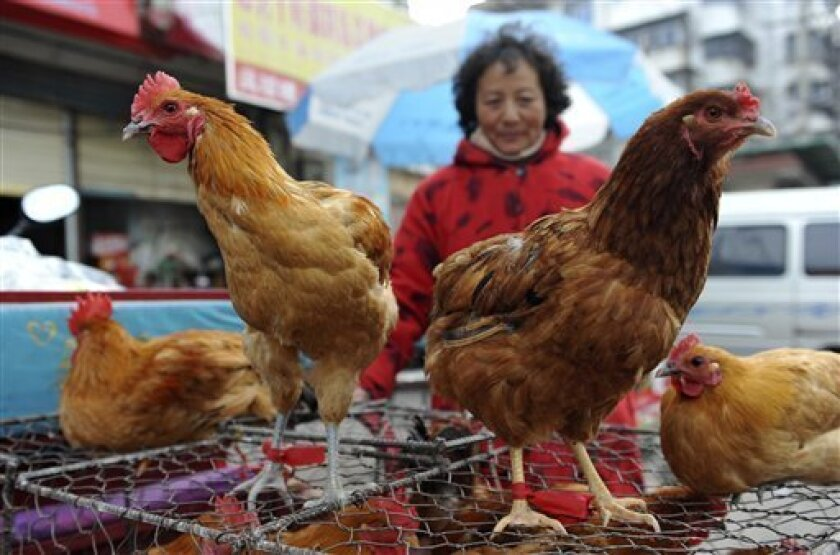A vendor waits for customers near chicken cages at a market in Fuyang city, in central China's Anhui province, Sunday, March 31, 2013. Two Shanghai men have died from a lesser-known type of bird flu in the first known human deaths from the strain, and Chinese authorities said Sunday that it wasn't