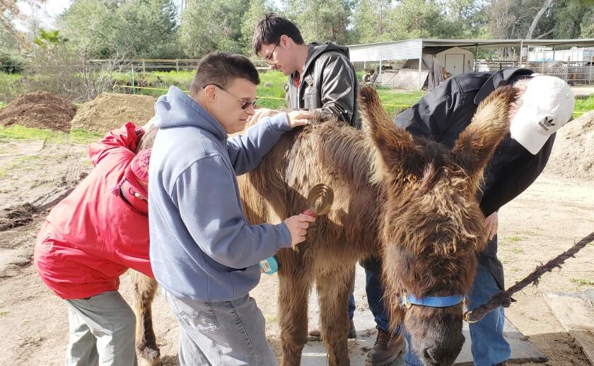 Goliath the donkey.jpg