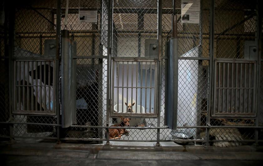 County animal shelter