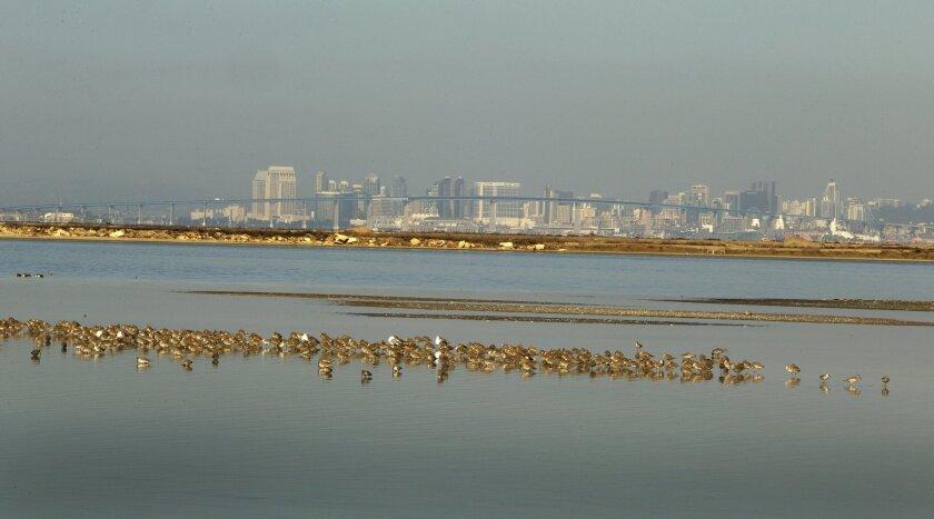 The South San Diego Bay National Wildlife refuge with San Diego skyline.