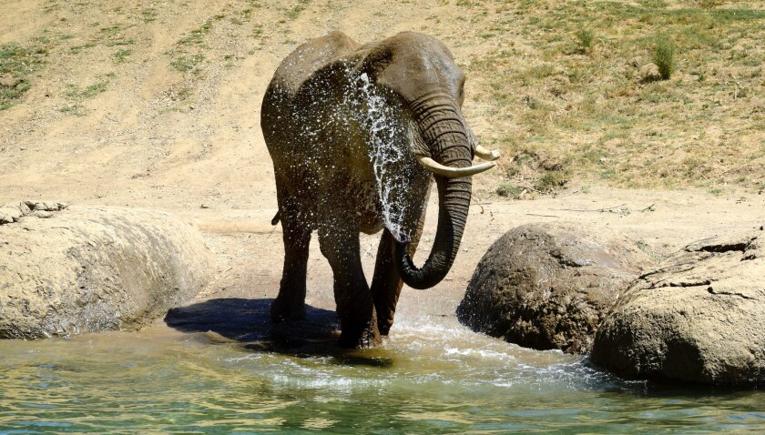 M'Dunda, 50, was the oldest African elephant in captivity in North America.