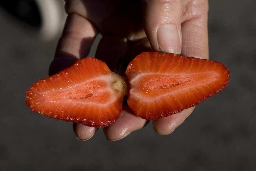 Chandler strawberry grown by Gloria Tamai in Oxnard.