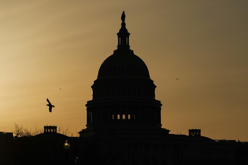 A bird flies near the U.S. Capitol dome at sunrise in Washington.