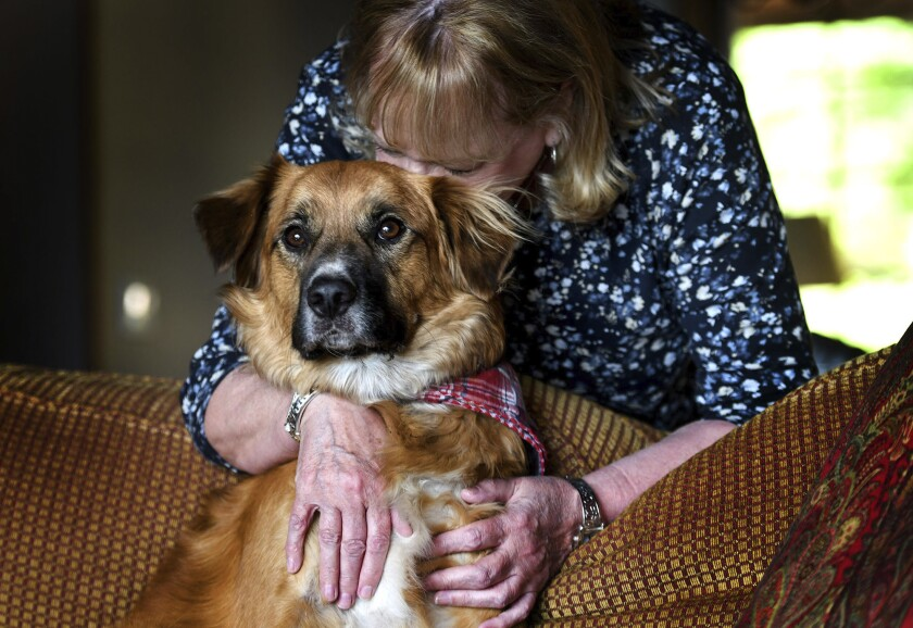 Linda Oswald hugs 2-year-old dog Tilly at their home in Hayden, Idaho on Tuesday, June 8, 2021. The dog vanished for two days after being ejected from a vehicle during a car accident and has been found apparently doing the job it was bred to do — herding sheep. Oswald's family and their dog, Tilly, were driving along Idaho State Highway 41 on Sunday when they crashed into another car, launching the dog through the rear window, The Spokesman-Review reported. (Kathy Plonka/The Spokesman-Review via AP)