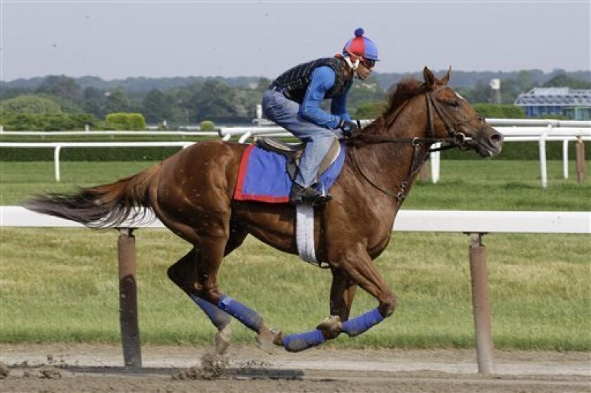 Animal Kingdom, with exercise rider David Nava up, gallops, Friday, June 10, 2011 at Belmont Park in Elmont, N.Y. Animal Kingdom, winner of the Kentucky Derby, is entered in Saturday's Belmont Stakes. (AP Photo/Mark Lennihan)