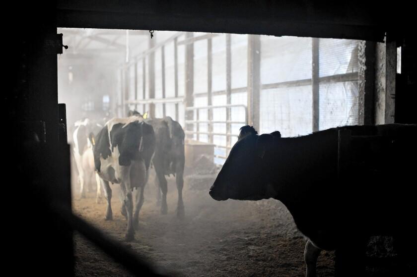 Illinois dairy farm