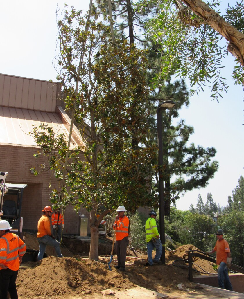 A 35-foot magnolia tree was delivered to the city of El Cajon on Wednesday to go in front of East County's newest entertainment hub, The Magnolia. Formerly known as East County Performing Arts Center, The Magnolia is run by Live Nation Worldwide, Inc. The Queen tribute band Queen Nation will open the venue on Sept. 12.