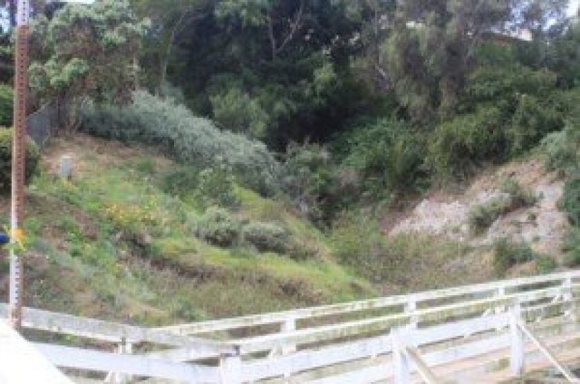 The cliffs formerly overgrown with invasive Arundo plant are in the process of being replanted.