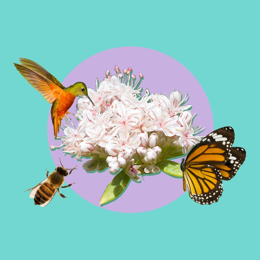 Photo collage of a humming bird, bee and butterfly surrounding a flower