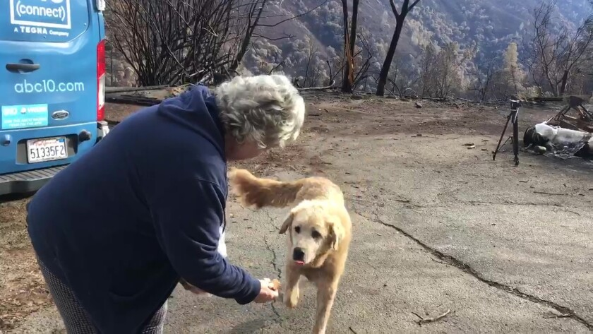Despite the devastation all around him, Camp fire dog waited for ...