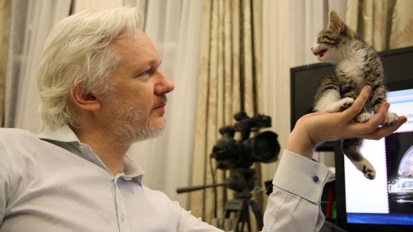 WikiLeaks founder Julian Assange with his pet cat in Ecuador's embassy in London.
