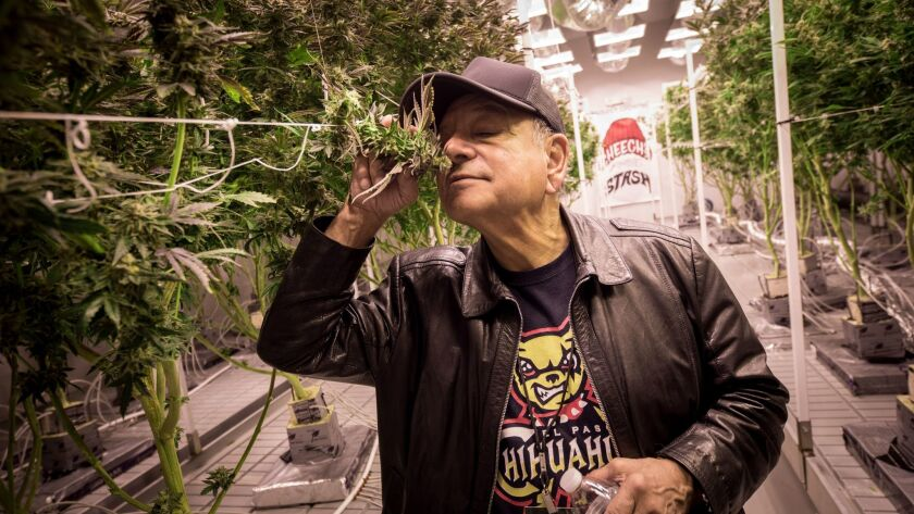 Pot activist, actor, author Cheech Marin inspects marijuana plants at Redwood Cultivation, a farm in