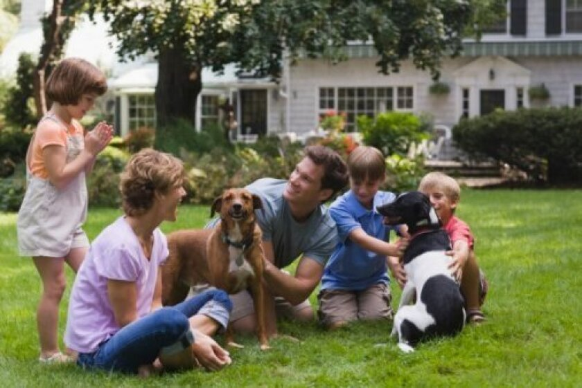 Take expert pet health advice to keep your furry friends thriving this year. Photo credit: Jupiter Images, Photos.com.