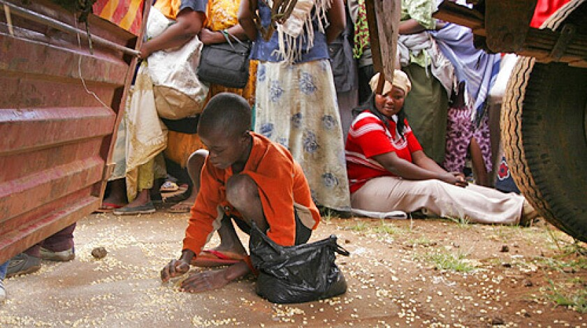 A Kenyan boy collects grain that had fallen under a truck containing World Food Program relief food for the residents of the Kibera slum.