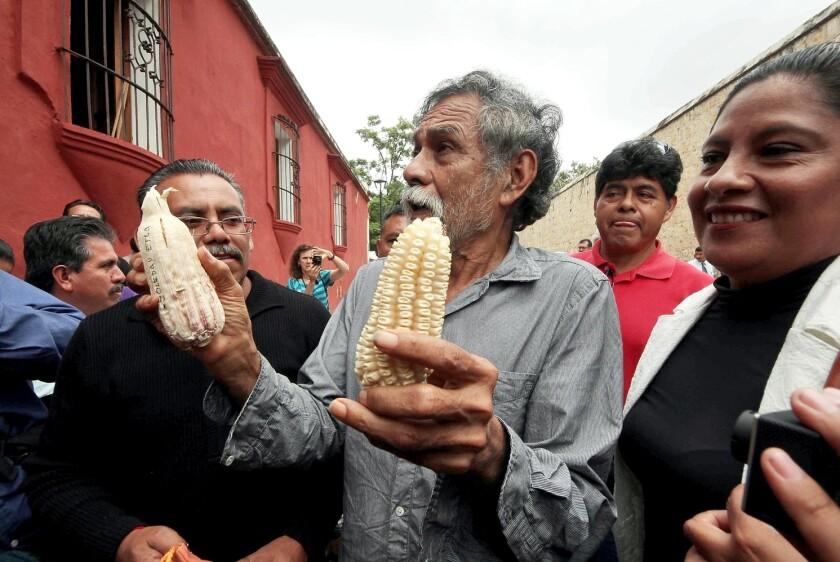 Prohibir la importación de maíz transgénico fue una de las principales demandas del pintor y activista Francisco Toledo.