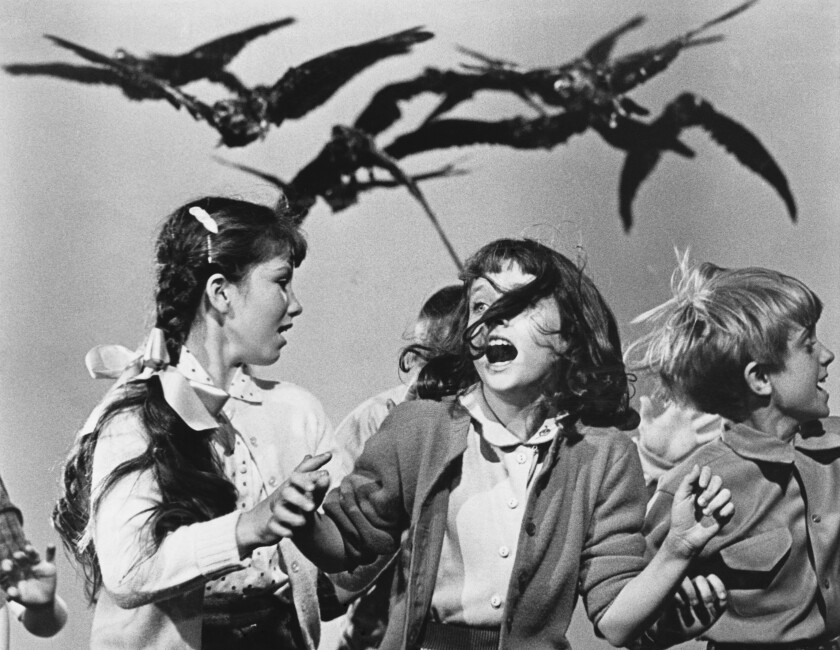 """Birds chase and attack schoolgirls running in terror in Alfred Hitchcock's 1963 classic """"The Birds"""""""
