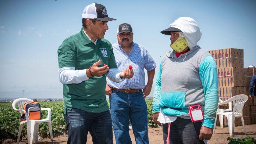 Former Los Angeles Mayor Antonio Villaraigosa campaigns at Cabrera Farms in Salinas.