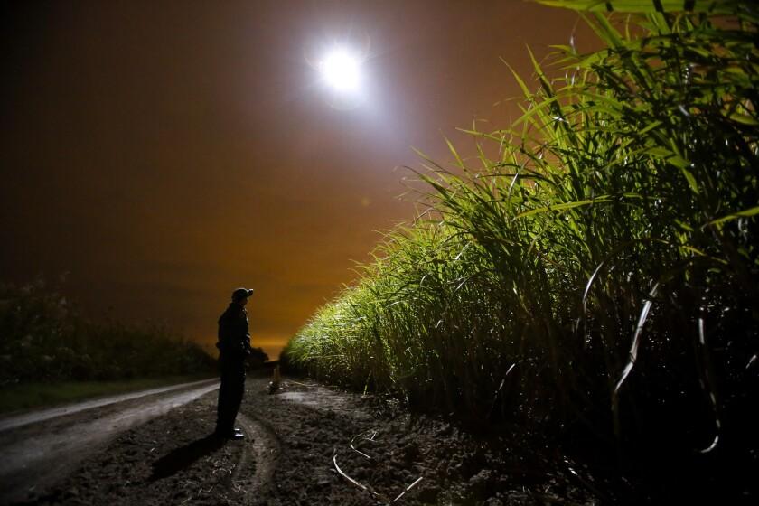 A Border Patrol agent along the Mexico border near McAllen, Texas, in November.