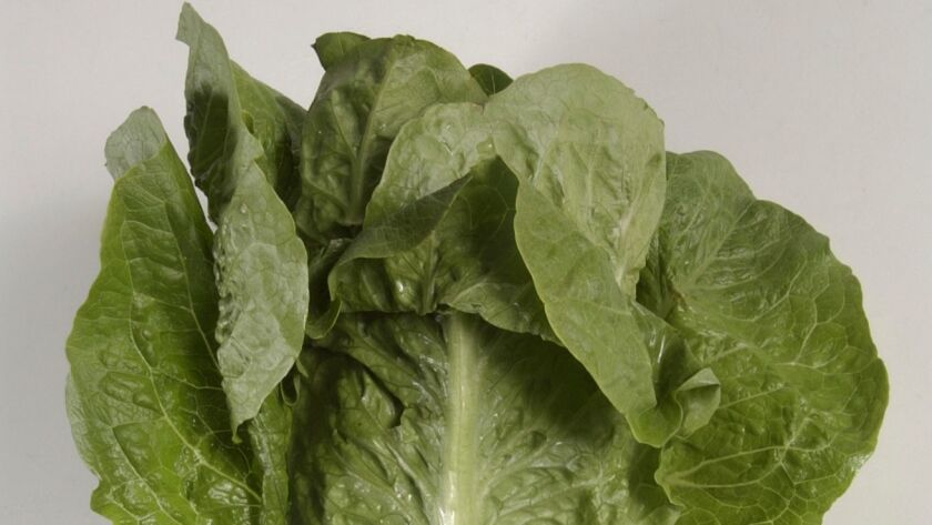 FILE - This undated photo shows romaine lettuce in Houston. On Friday, June 1, 2018, the U.S. Center