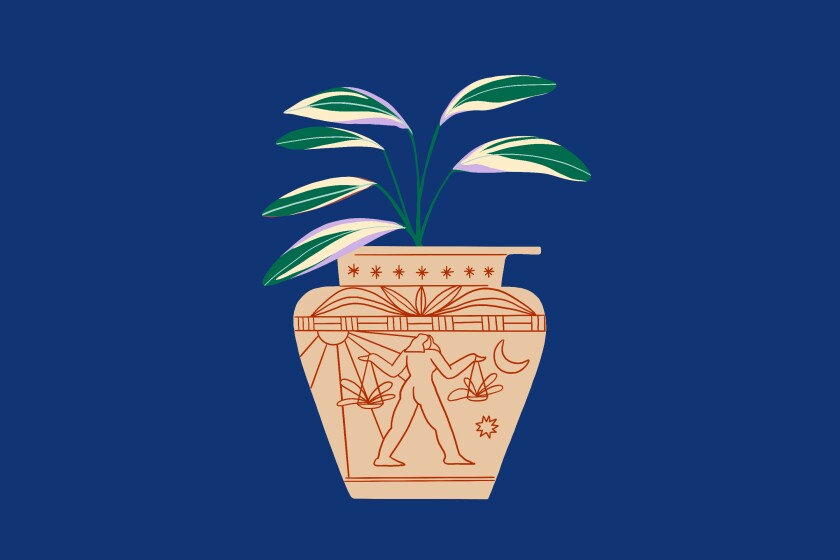 We've scouted out the best houseplant for your zodiac sign.