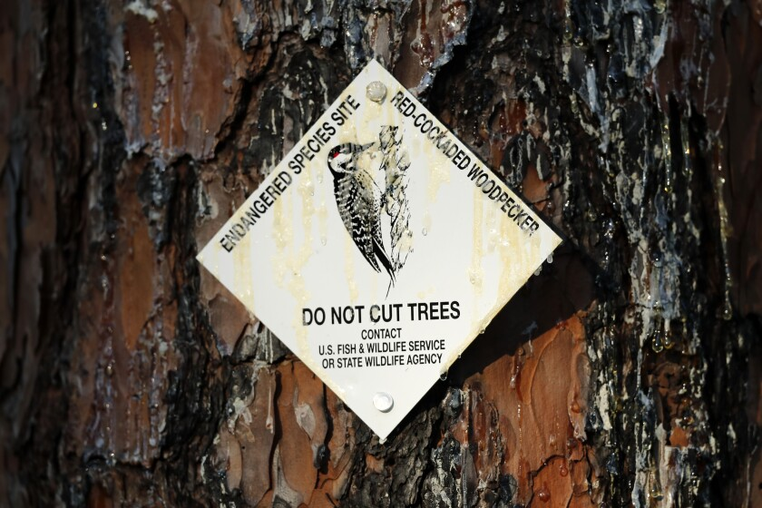A sign warns not to cut down a tree.