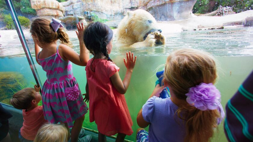 Visitors to the San Diego Zoo get close to a polar bear.