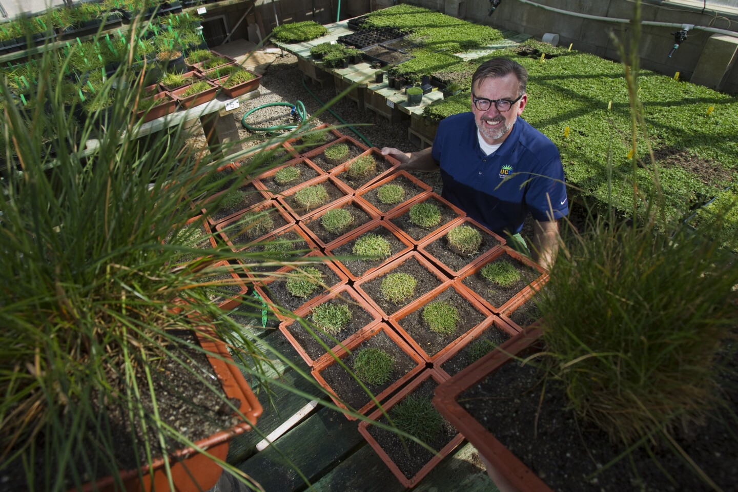 Jim Baird, turfgrass specialist at UC Riverside, displays grasses he is studying for drought tolerance.