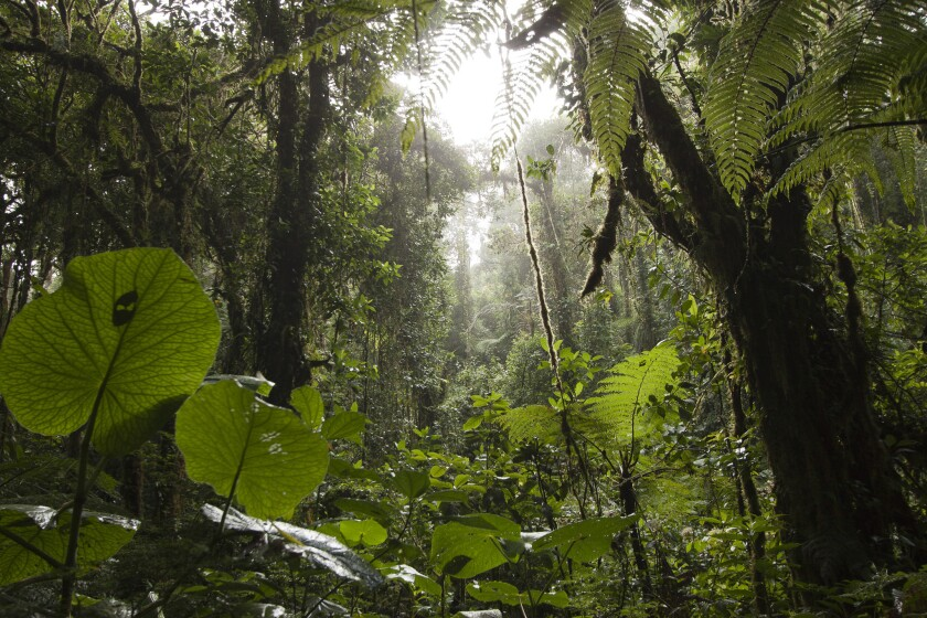 A forest in Costa Rica