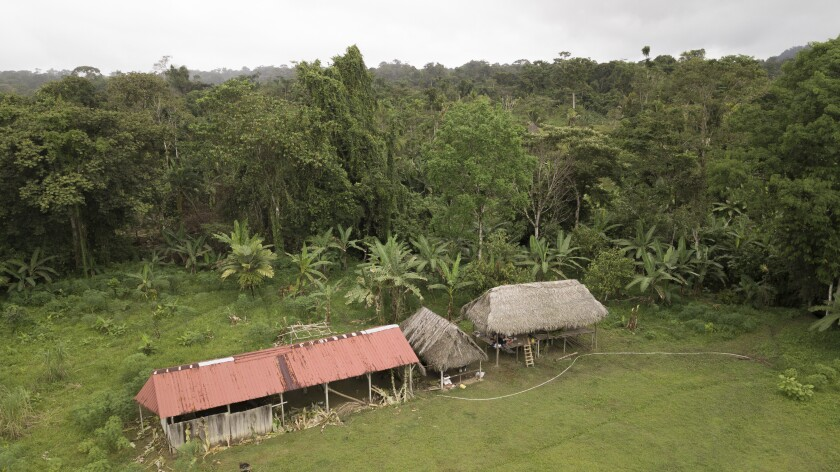 Huts in a jungle clearing
