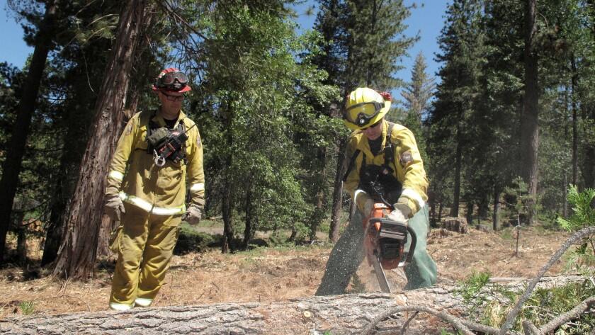 CalFire crew members remove dead trees near Cressman in the Sierra Nevada.