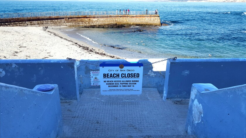 La Jolla Children's Pool beach is closed by way of a chain and sign. Photo taken Dec. 19.