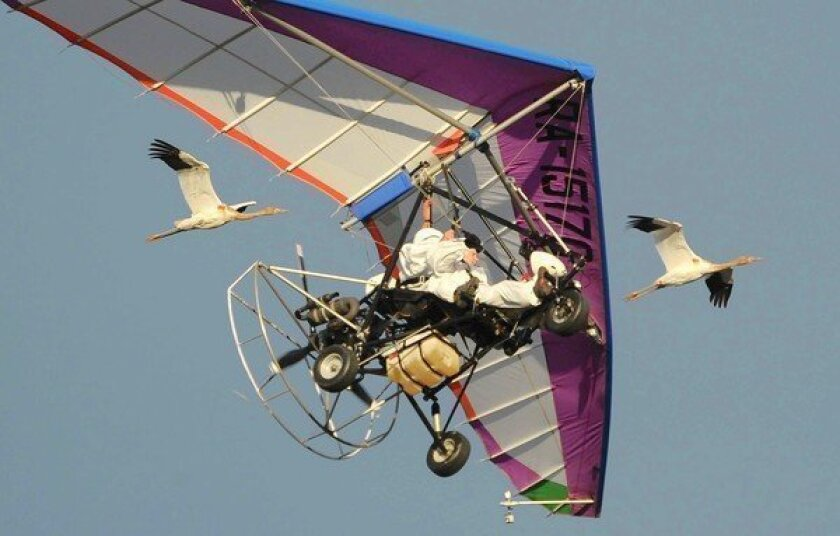 Russian President Vladimir Putin flies in a motorized hang glider with Siberian white cranes. His latest adventurous feat drew ridicule in the Russian blogosphere.