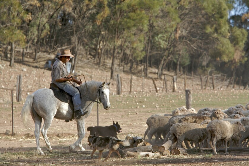 Visitors can experience Australia's rural hospitality on a farm stay and bush adventure.