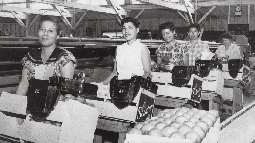 Citrus Workers in Santa Ana