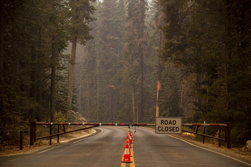 """A gate with a """"road closed"""" sign blocks a highway lined by tall trees"""