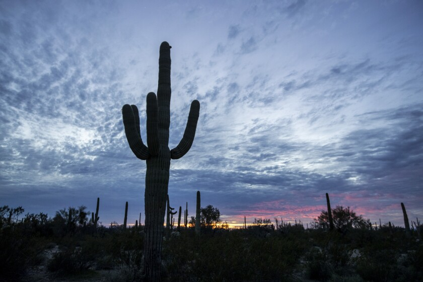 A saguaro cactus silhouetted against a cloudy sky