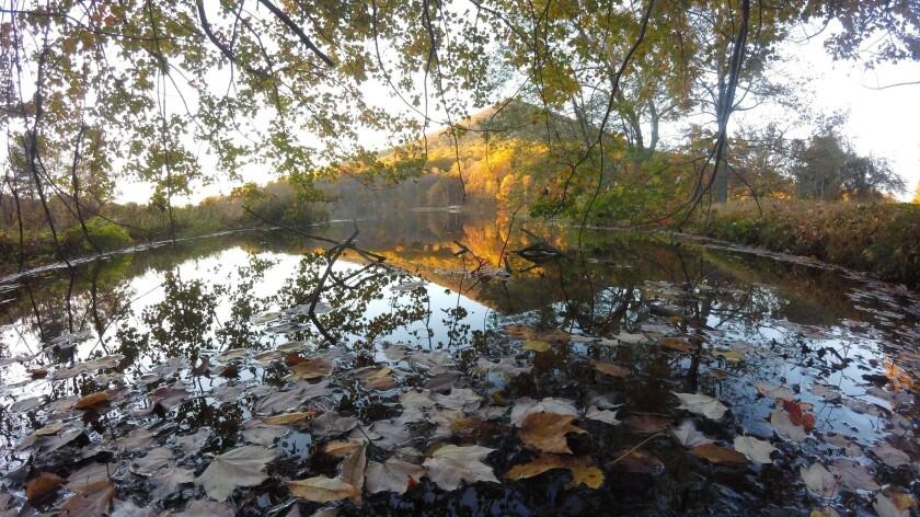 Abbott Lake, near Peaks of Otter Lodge, is a manmade feature along the Blue Ridge Parkway near Bedford, Va.