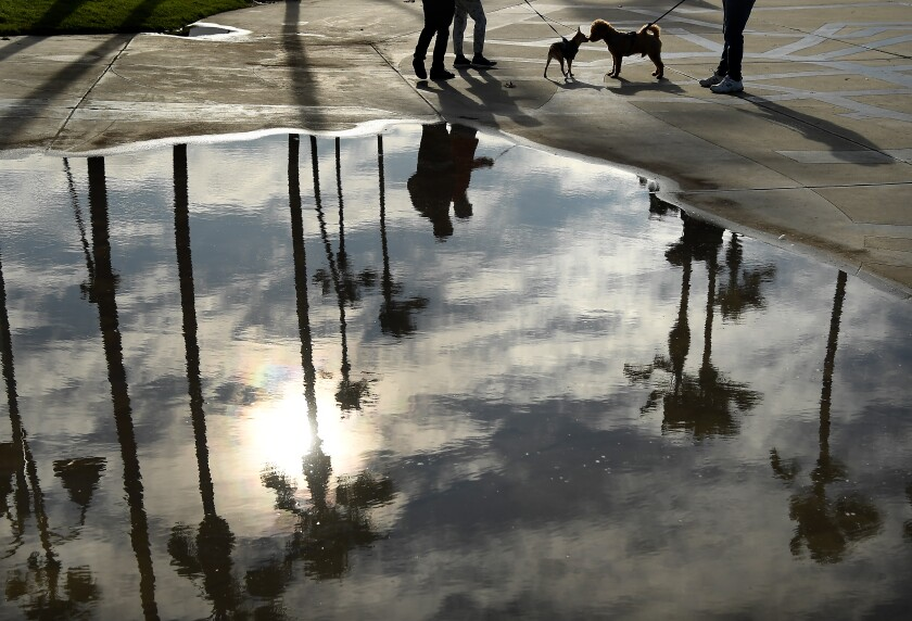 Two dogs greet each other along the boardwalk in Venice Beach on Thursday morning after heavy rains blew through Los Angeles.