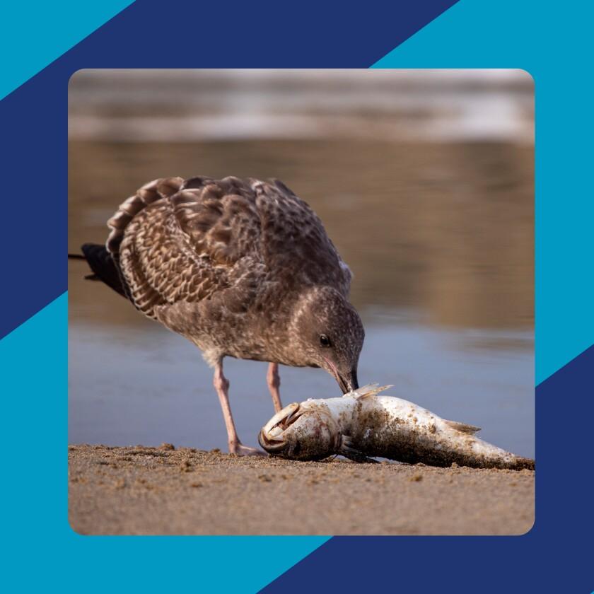 A bird pecks a dead fish on the sand.