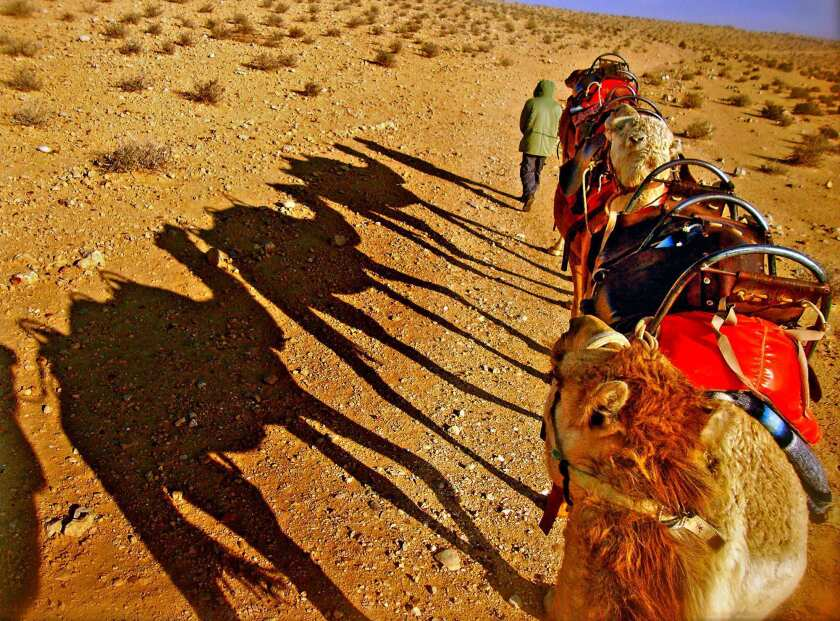 Bedouins take guests on a camel ride through the desert.