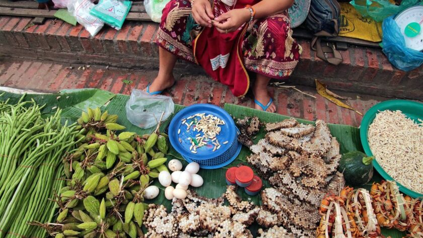 Wasp larvae are among edibles sold at the outdoor market in Luang Prabang. CREDIT: Norma Meyer