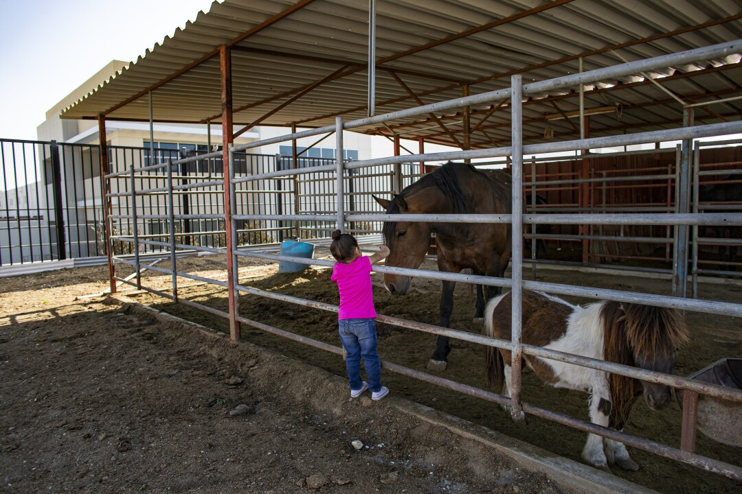 Arianna Diaz pets family horses in her backyard which now abuts a giant warehouse